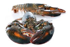 25 delicious facts about lobsters mental floss