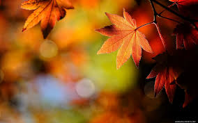 cute fall wallpapers fall wallpaper with leaves 43 free fall with leaves wallpapers