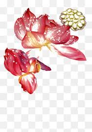 lotus sketch png images vectors and psd files free download on