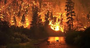 Washington forest images Washington forest managers are lighting forest fires the good kind jpg