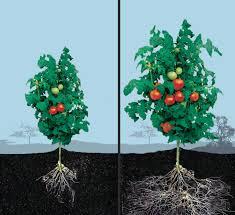 native plant fertiliser california native plant myths 2014 notes