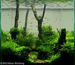 Aquascape Aquarium Designs 2012 Aga Aquascaping Contest 327