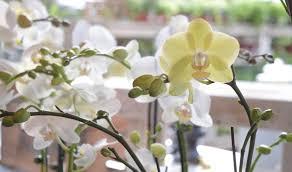Indoor Flowering Plants by Indoor Plants Faddegon U0027s Nursery Latham Ny