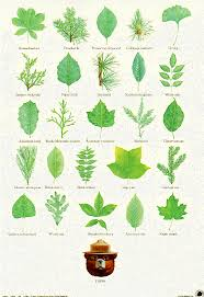 just this picture leaf identification post from smoky bear and the