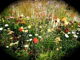 cottage garden flowers by katiealicewoodmore on deviantart