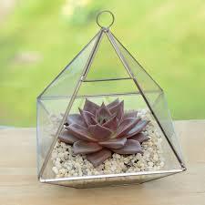 succulent kits geometric glass vase succulent terrarium by dingading terrariums