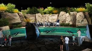 finding arizona odysea aquarium