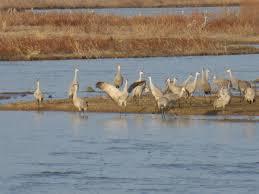travel column crane migration brings splendor to nebraska flyway