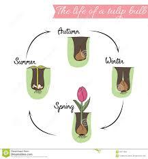garden design garden design with growing tulips from bulbs