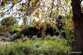 a fall visit to the denver botanic gardens heiditown