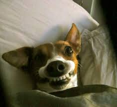 Funny Dog Face Meme - dogs make hilarious faces dog is not pleased guff