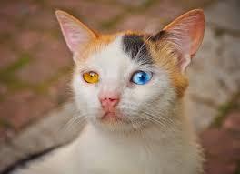 beautiful kittens the beautiful strange eyed kitten kitty bloger