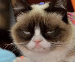 19 Awesome Grumpy Cat Christmas - sad cat gif 19 gif images download