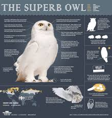 White Owl Meme - superb owl meme 100 images happy superb owl sunday meme on imgur