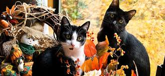 cat friday special thanksgiving pet safety edition bloglander