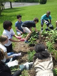 native plant restoration schoolyard ecological restoration project wissahickon valley