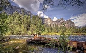 Beautiful Landscapes Landscapes Beautiful Landscape Nature Forest Area Wild Sky