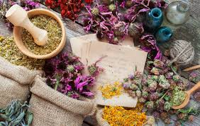 australian native medicinal plants medicinal plants series karolinas net