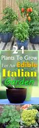 Vegetables For Container Gardening by 21 Plants To Grow For An Edible Italian Garden Italian Container