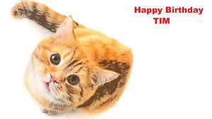 tim cats gatos happy birthday youtube