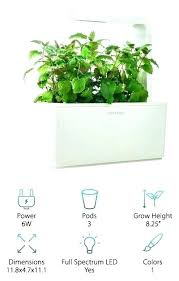 growing herbs indoors under lights low light herbs even if you have outdoor gardening space there are