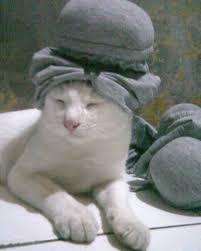 hukum memandulkan kucing kucing lokal domestik kung page 473 kaskus