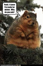 Dead Squirrel Meme - funny dead squirrel pictures