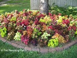 Garden Tips And Ideas Gardening Tips And Ideas For Planting Flowers Around Trees