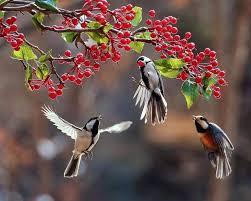 Flower And Bird - flower arrangement green garden agricultural co in bangladesh