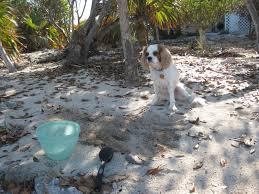 island dog choosing the better life
