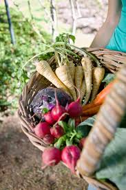 vegetables that grow under the ground or root vegetables are