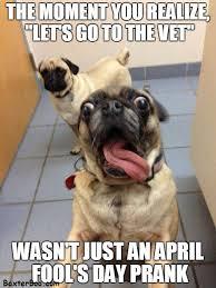 Dog At Vet Meme - dog april fool s day joke no vet cute pet memes and quotes