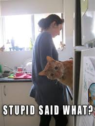 Funny Stupid People Memes - th id oip hqr bjpfhqm25 8mlrnyeghaj3