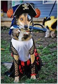 Dog Halloween Costume Ideas 48 Halloween Pet Costume Ideas Images Pet