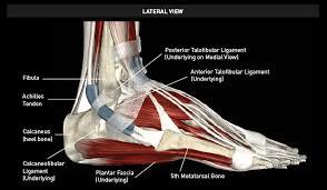 High Ankle Sprain Anatomy Ankle Sprains U0026 Ankle Instability
