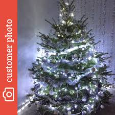 freshly cut blue spruce buy online free delivery send me a
