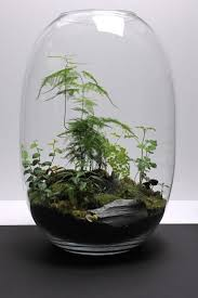 terrarium plants how to take care of yours ivelfm com house