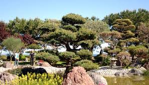 Japanese Rock Garden Plants Japanese Rock Garden Plants Garden Guides