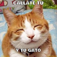 Gato Meme - callate tu y tu gato memes en quebolu