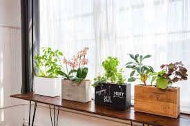 Window Sill Garden Inspiration Plants Just Place Windowsill Planter Box Near Sun Gadget Review