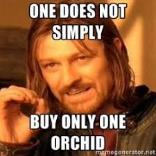 Meme Generator One Does Not Simply - meme generator one does not simply buy one orchid google search