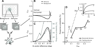 high e vector acuity in the polarisation vision system of the