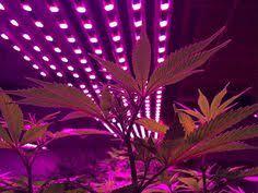 commercial led grow lights the illumitex grow lights story illumitex videos pinterest