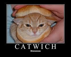 Whats For Dinner Meme - cat it s what s for dinner my journey