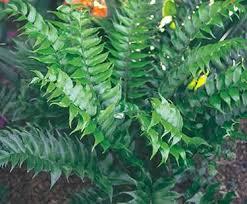 Landscaping Baton Rouge by 312 Best Baton Rouge Landscape Plants Unique Images On Pinterest