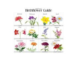 flowers of the month find your birth month flower