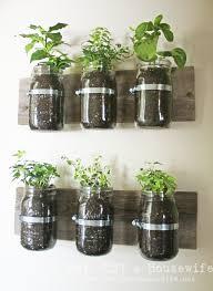 100 interesting indoor plants 85 best gardening images on