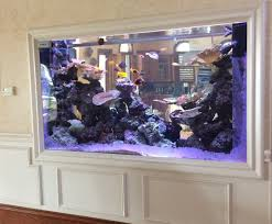 Aquarium For Home by Aquarium Illusions Of Tampa U2013 Professionally Maintained Aquariums