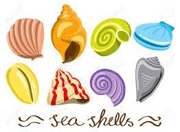set of colorful sea shells royalty free cliparts vectors and