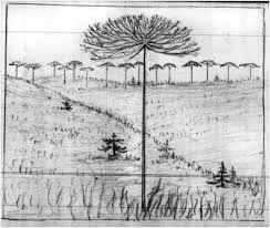 tracking john muir to the monkey puzzle forests of chile bruce